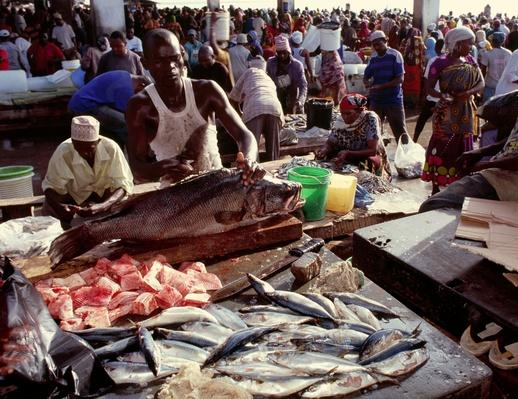 African Fishmonger at Work | Earth's Resources