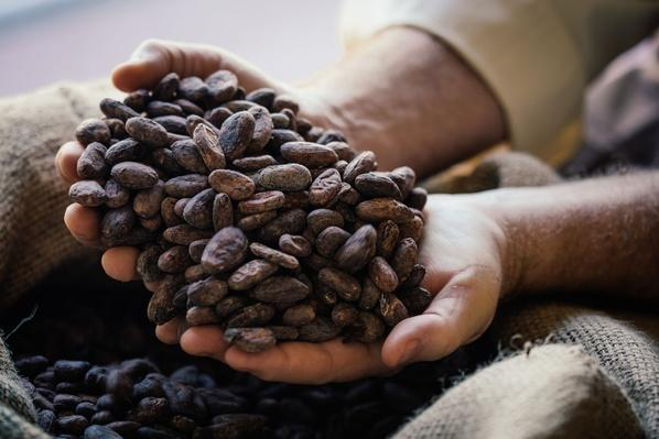 Hands Holding Cocoa Beans | Earth's Resources