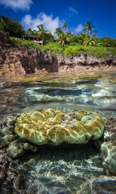 Coral Under the Water off Niue, South Pacific | Earth's Surface