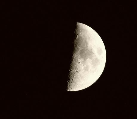 Low Angle View Of Half Moon In Clear Sky At Night | Earth and Space
