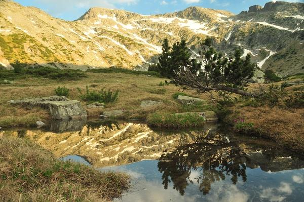 Pine Tree Reflecting in Pond, Rila Mountain | Earth's Surface