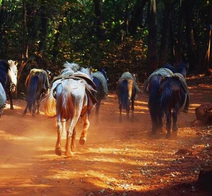 Horses Running on Dirt Road | Earth's Resources