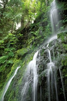 Olympic National Park, Quinault Rain Forest, Waterfall | Earth's Surface