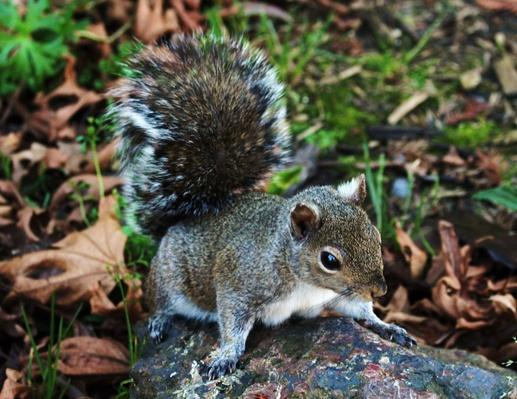 High Angle Close-Up Of A Squirrel | Animals, Habitats, and Ecosystems