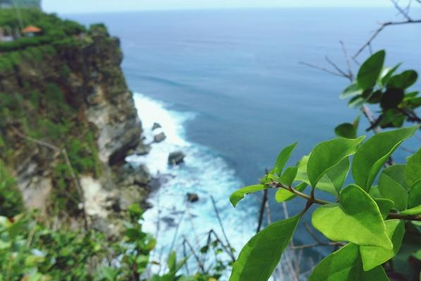 Close-Up of Plant Over Cliff and Sea | Earth's Surface