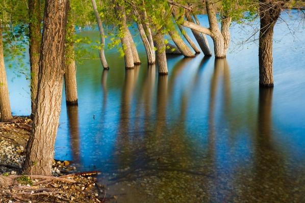 Flooded Trees, Lake Lowell, Long Exposure | Earth's Surface