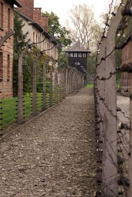 Barbed wire fences in Auschwitz | Remembering the Holocaust