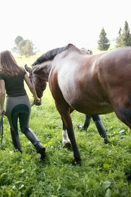 Rear View of Two People Leading a Horse | Earth's Resources