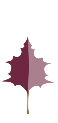 Autumn Season - Poplar Leaf | Clipart