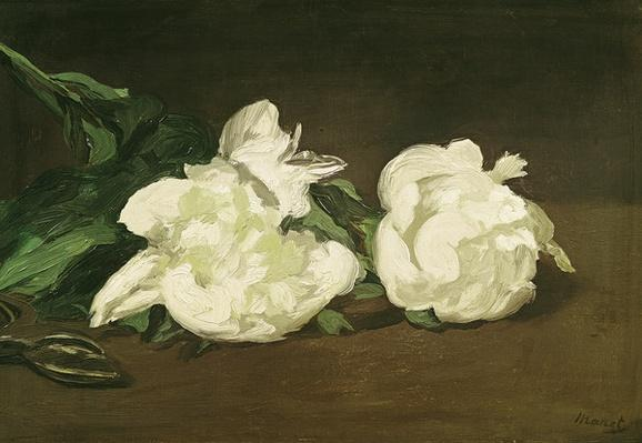 Branch of White Peonies and Secateurs, 1864