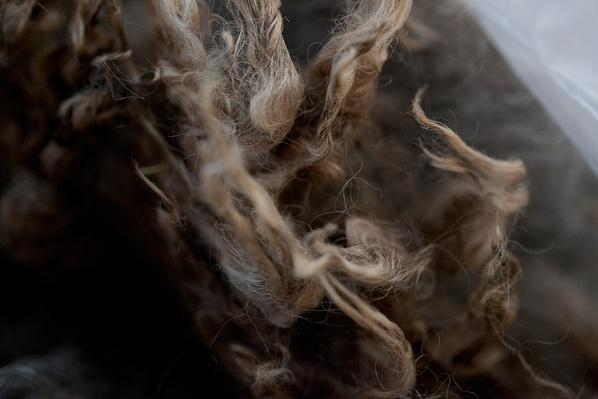 The Benefits of Wool | Global Oneness Project