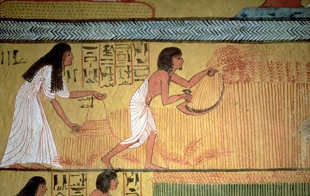 Detail of a harvest scene on the East Wall, from the Tomb of Sennedjem, The Workers' Village, New Kingdom