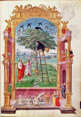 Harl 3469 f.15 Man on a ladder climbing a tree; in marginal drawing David watching Bathsheba and her ladies bathing, from 'Splendor Solis' by Salomon Trismosin, 1582