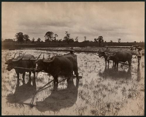 Farm work, c.1880