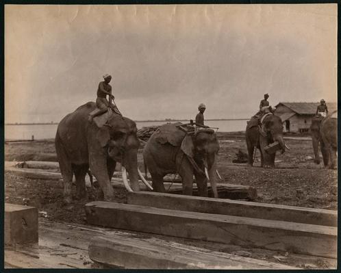 Working with elephants, c.1880