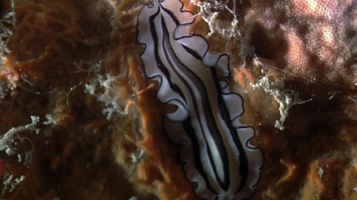 The Shape of Life | Flatworms: The First Hunter