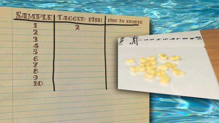 Random Sampling: How Many Fish?