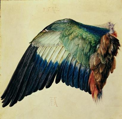 Wing of a Blue Roller, 1512