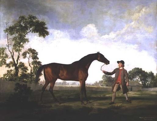 """The Duke of Ancaster's bay stallion """"Spectator"""", held by a groom, c.1762-5"""