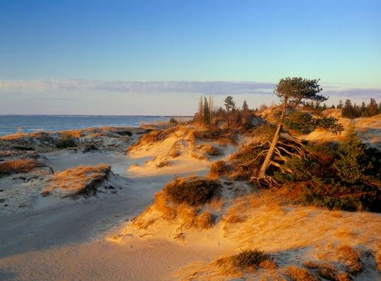 Sand Dunes - Lake Huron, Pinery Provincial Park, Ontario, Canada | Earth's Surface