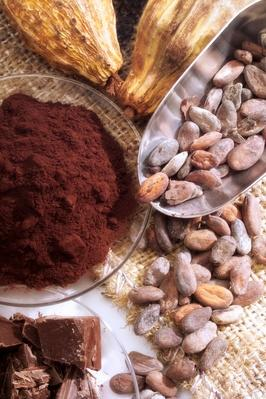 Cocoa Pods and Chocolate Product | Earth's Resources