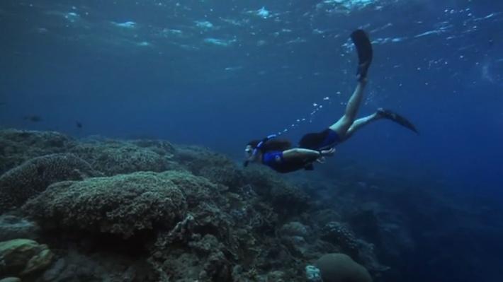 Cristina Diaz, Taxonomist:  Sponge Biology