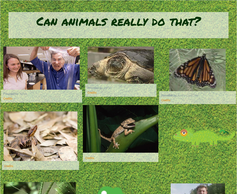 Can animals really do that?