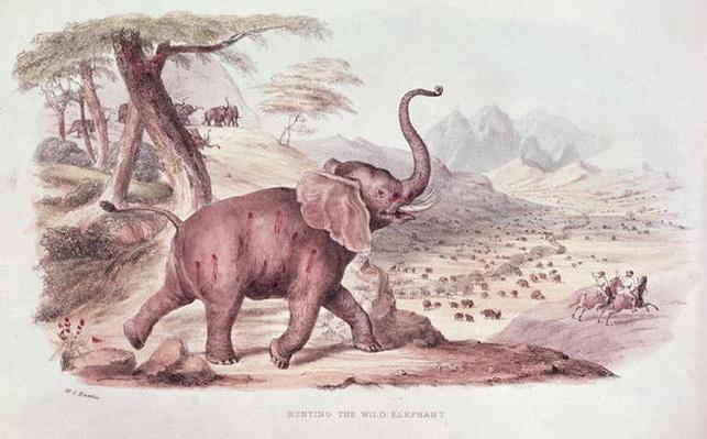 Hunting the Wild Elephant, illustration from 'Wild Sports of South Africa' by W.C. Harris, 1841