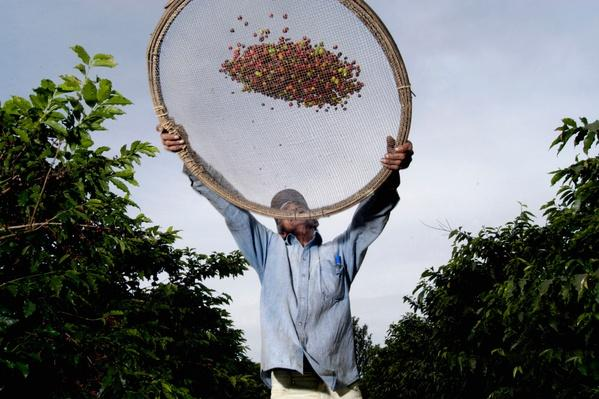 Brazil, Coffee Plantation | Earth's Resources