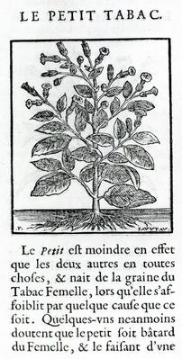 """le Perit Tabac, Illustration from """"Discours du Tabac"""" by Jean Le Royer de Prade, 1671"""
