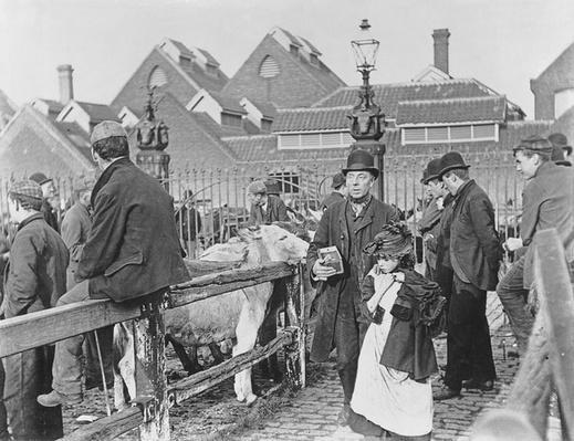 British village cattle market, Victorian, 19th century