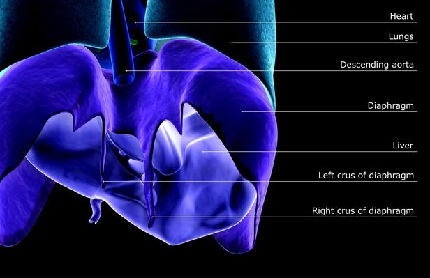 The Liver | Science and Technology