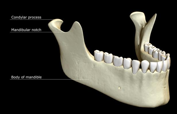 The jaw bone | Science and Technology