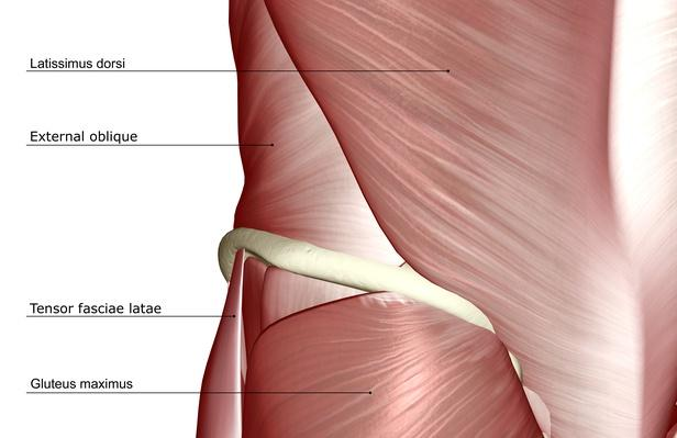 The muscles of the lower body | Science and Technology