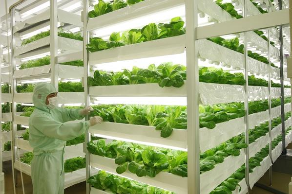 Plant Factories Propose A New Style Of Agriculture | Agriculture and Forestry