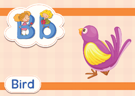 Vocabulary Cards - B for Bird | Clipart