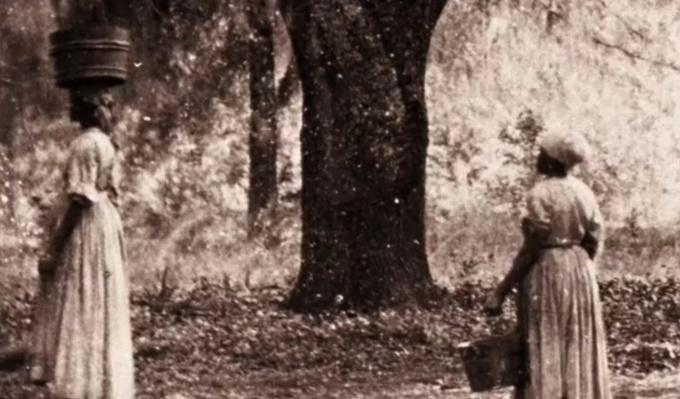 Slaves on the Plantation | Ken Burns: The Civil War