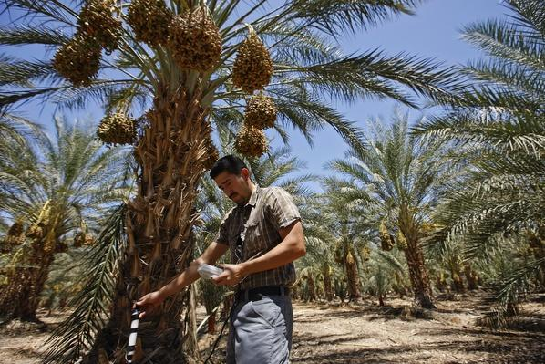 Water Issues in the Coachella Valley | Agriculture and Forestry