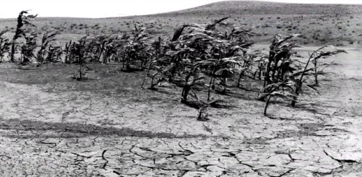 Environmental Catastrophe | Ken Burns: The Dust Bowl
