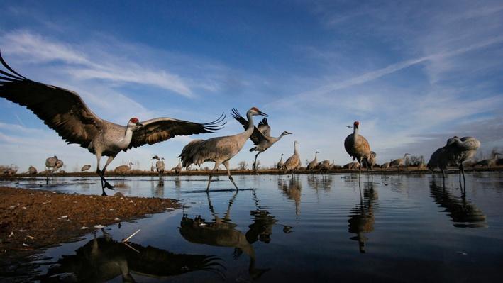 Platte Basin Timelapse 2: Sandhill Crane Roost