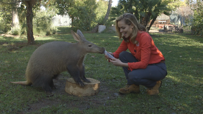 Woman with Aardvark at the zoo
