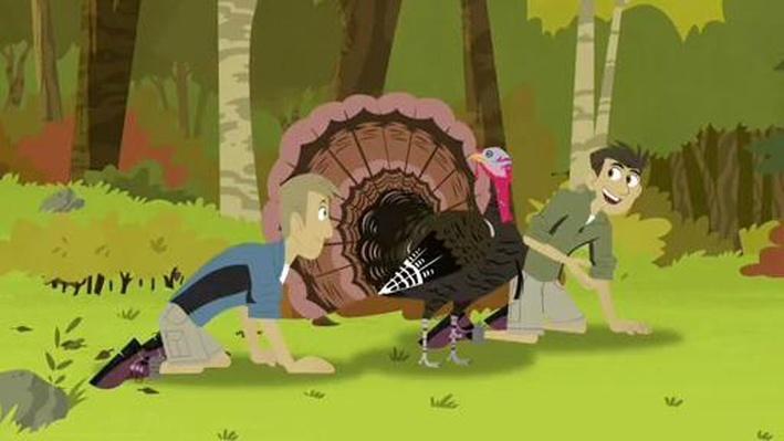 Activate Turkey Power! | Wild Kratts
