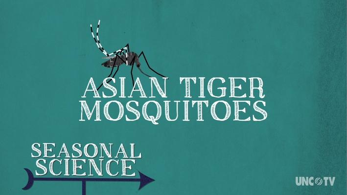 Seasonal Science: Asian Tiger Mosquito