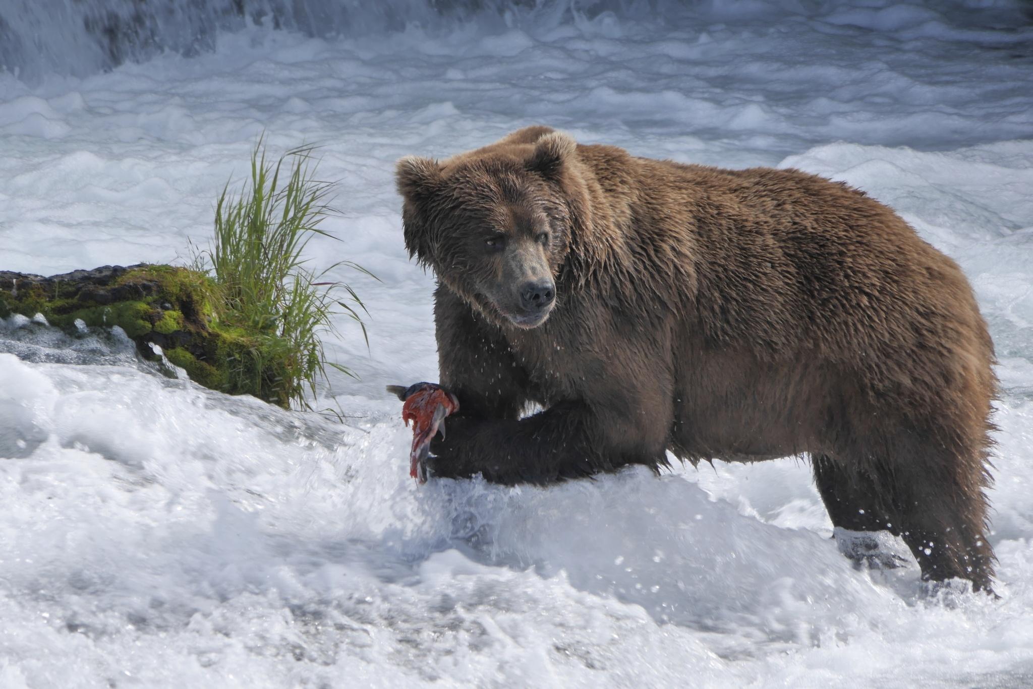 Play: Wild Alaska