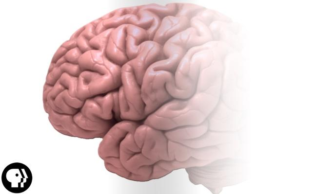 How Good is Your Memory?   BrainCraft