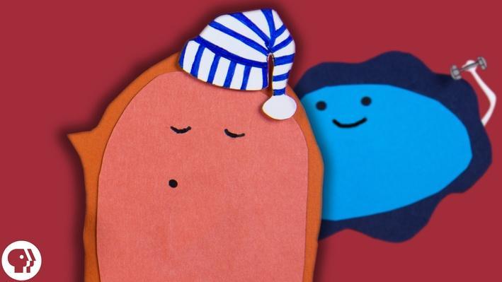 Good Sleep = Good Gut? | Braincraft