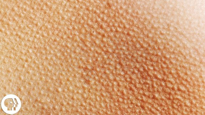 This Video May Give You Goose Bumps | Braincraft