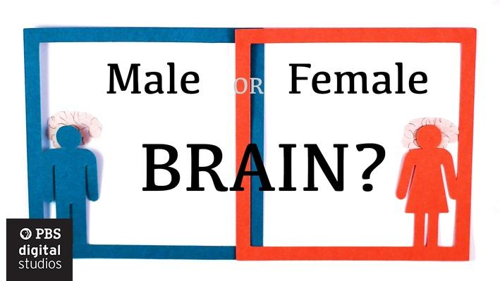 Are Male and Female Brains Different? | BrainCraft