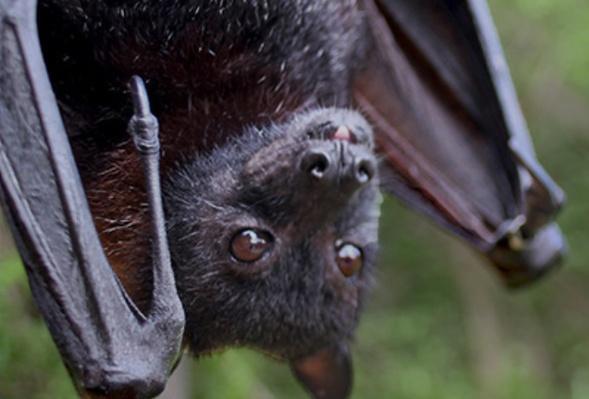 Digital Adventure 360 Interactive Experience: Bats (Lesson Plan)