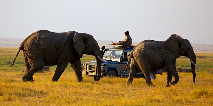 Soila Sayialel and Elephants in Amboseli National Park
